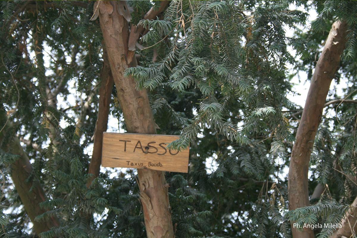 Flora-Tasso